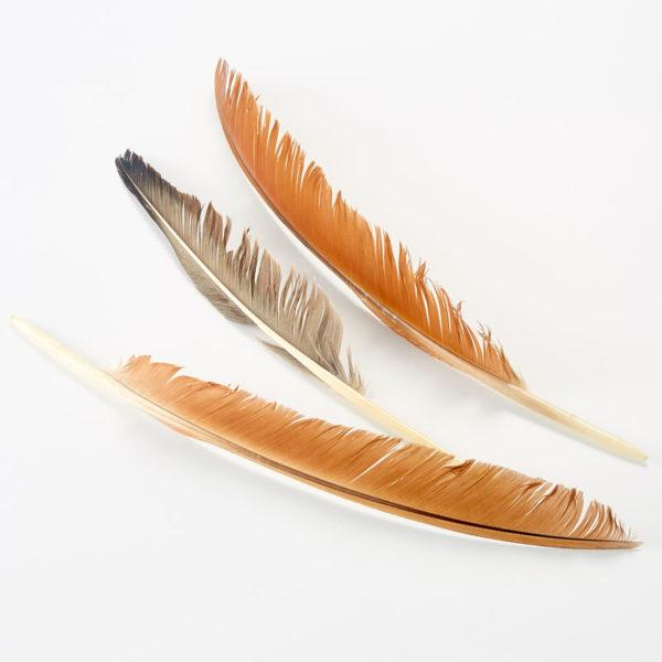 Écouvillons en plumes